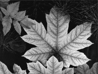 Ansel Adams, Leaf Glacier Bay