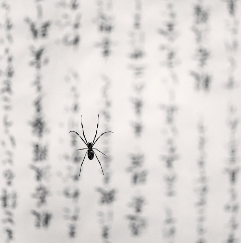 Michael Kenna, Spider and Sacred Text